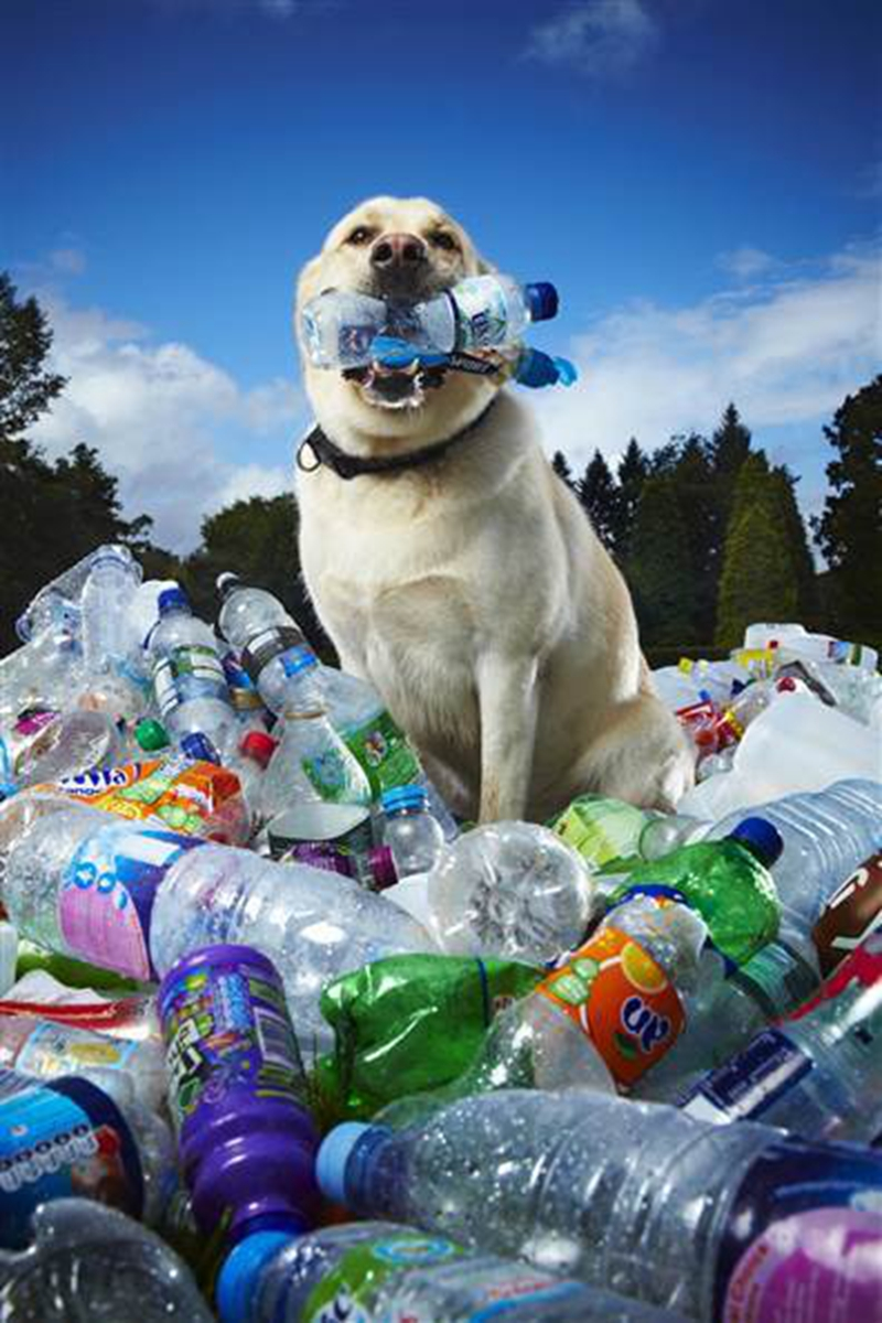 Dogs-Recycling-Plastic-Bottles01