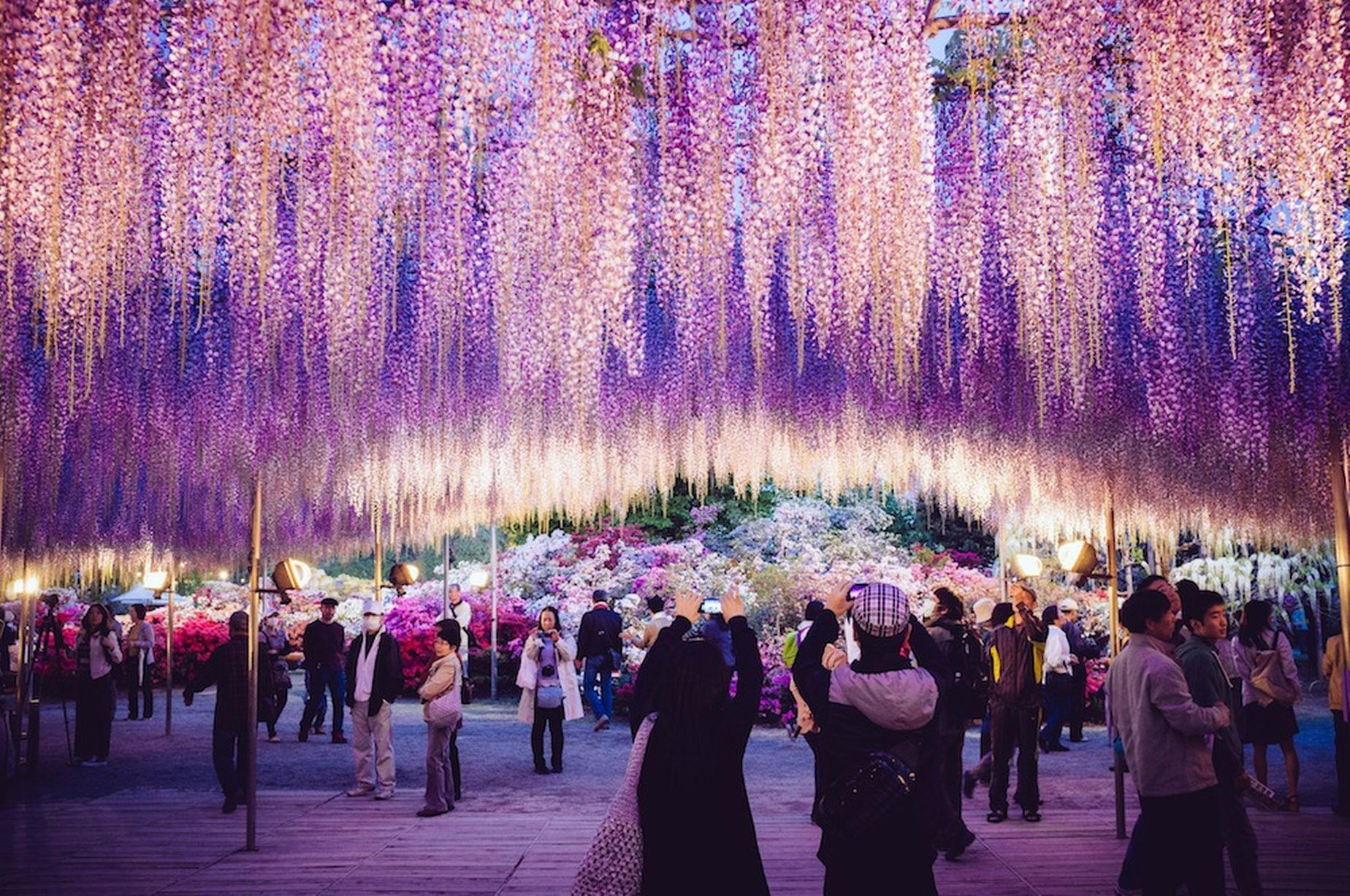 PAY-Ashikaga-Flower-Park (1)