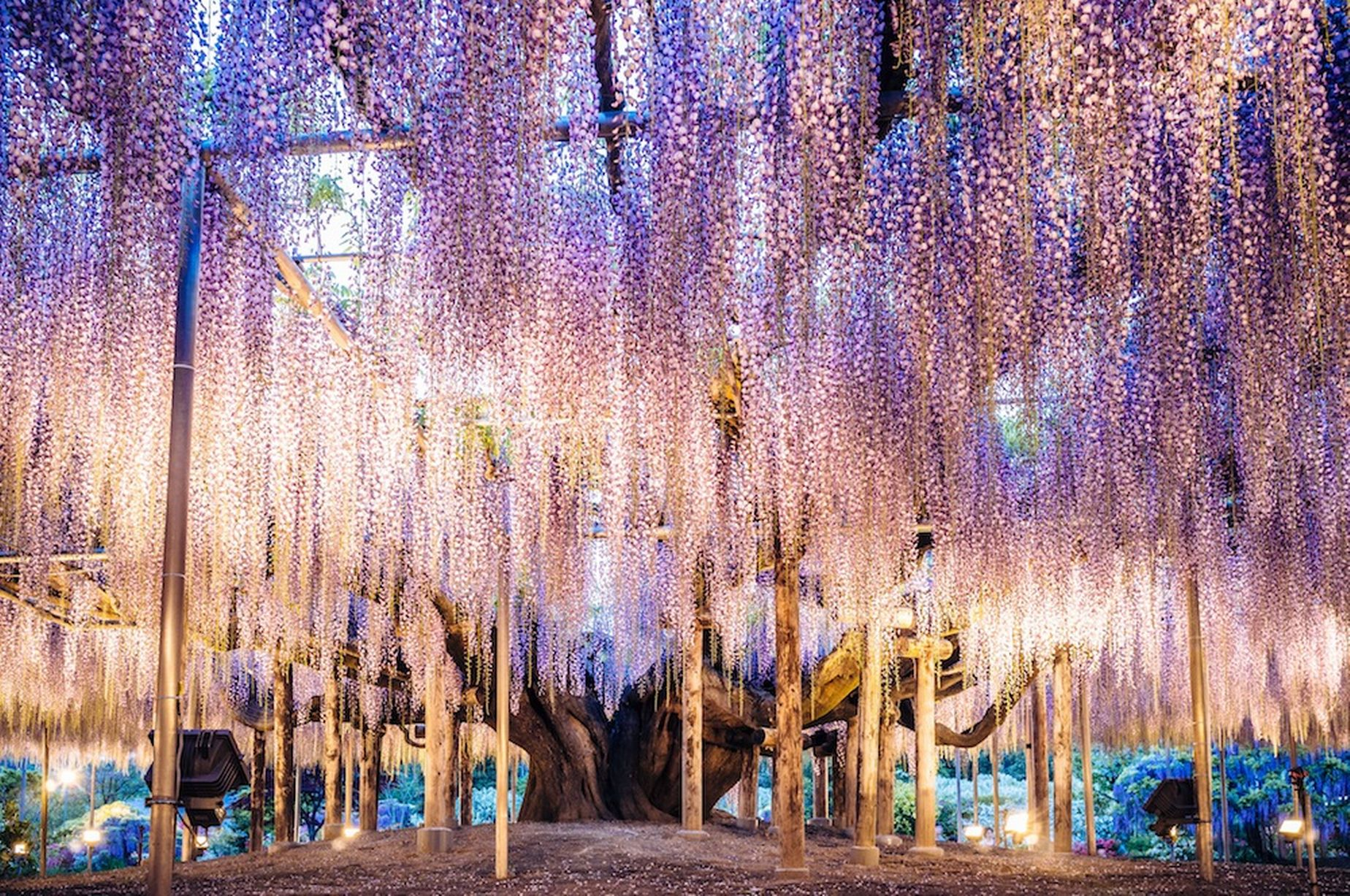 PAY-Ashikaga-Flower-Park (2)