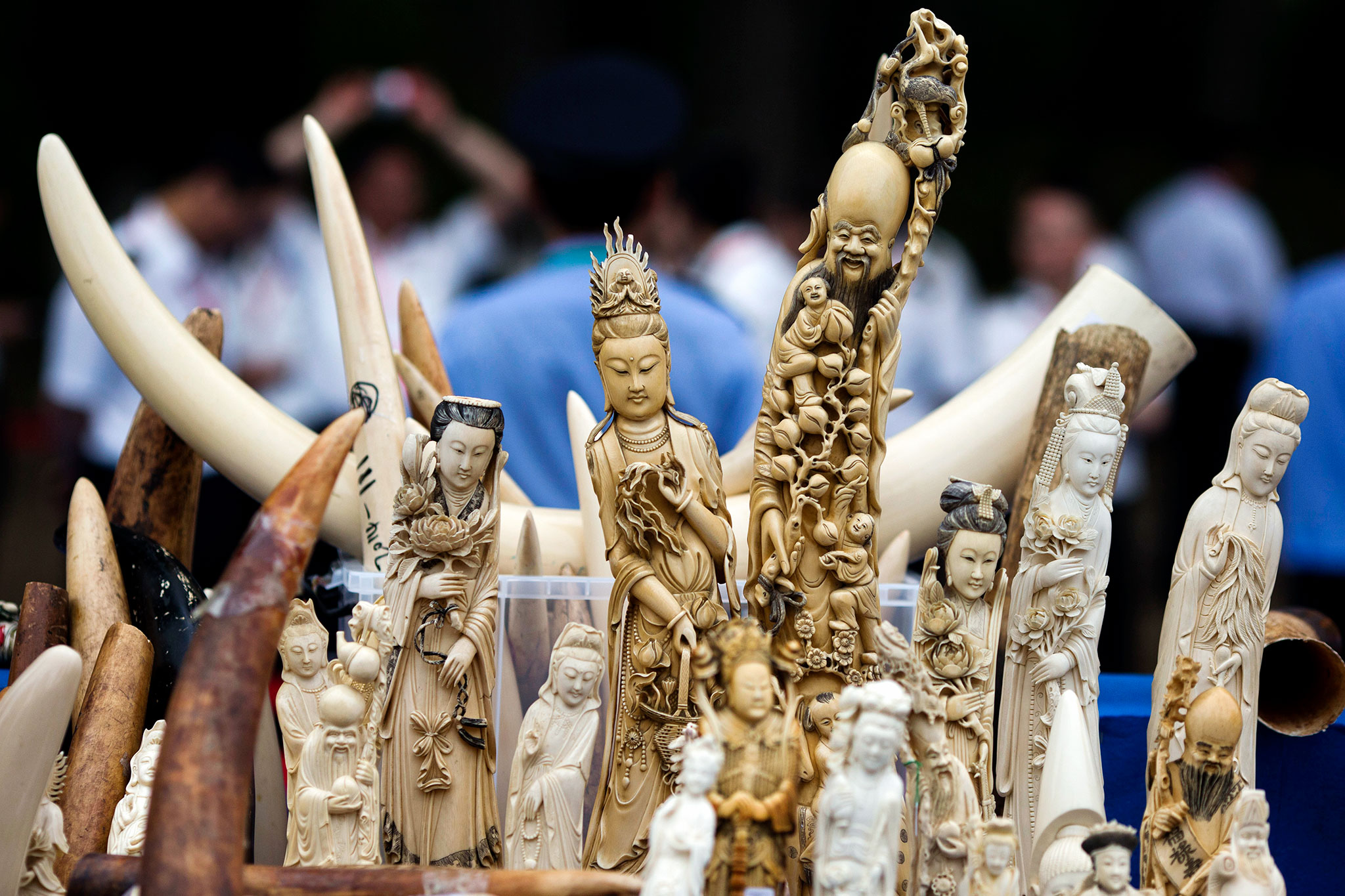 Ivory products are prepared for destruction during a ceremony in Beijing, Friday, May 29, 2015. China's State Forestry Administration and General Administration of Customs officials presided over a ceremony to destroy more than 660 kilograms of ivory that was seized after being smuggled into the country, as part of a crackdown on the illegal trade. (AP Photo/Ng Han Guan)